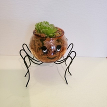 Spider Planter with Succulent, Halloween Pot, Sempervivum, Hens and Chicks image 7