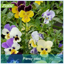 100pcs Pansy Seed Flower Seeds Bonsai Plants For Home Garden Beautiful N... - $2.18
