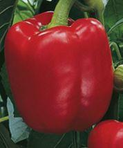 SHIP From US, 25 Seeds Triple 4 Hybrid Bell Pepper, DIY Healthy Vegetabl... - $27.99