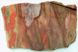 Petrified Wood 10 Specimen Slab Cabbing Rough - $4.60