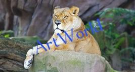 Digital download,Lion,Photography,Christmas decor,Home decor wall,Art,Pr... - $4.50