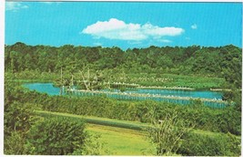Louisiana Postcard Avery Island Bird City Jungle Gardens - $2.84