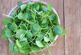 Watercress ,5000 Seeds,Use as Salad Greens,Culinary Herb,And Medicinal H... - $9.75