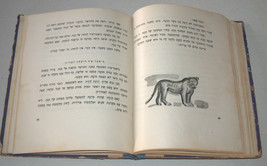 Nahum Gutman Beatrice Children Book Vintage Hebrew Israel 1958  image 6