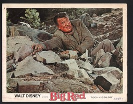Big Red Lobby Card-Émile Genest on the ground reaching for a rifle. - $28.03
