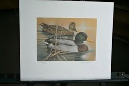 1995 Arkansas Migratory Waterfowl Print & Stamp >by Larry Hayden > LIt, ... - $64.35