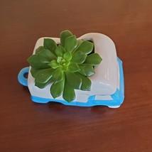 RV Planter with Succulent, Van Life Decor, Vehicle Plant Pot, Sedeveria Letizia image 5