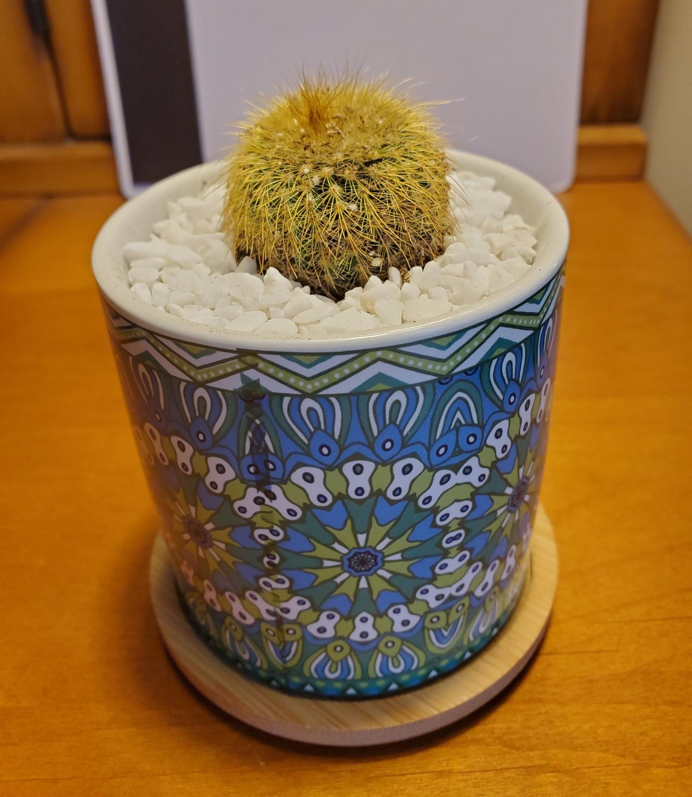 Goldenballcactus mandala 3