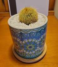 Golden Ball Cactus in Blue Ceramic Mandala Planter Pot, Parodia leninghausii