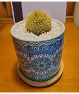 Golden Ball Cactus in Blue Ceramic Mandala Planter Pot, Parodia leningha... - $16.99
