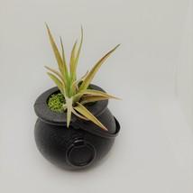 "Airplant in Black Cauldron, Halloween 2"" plastic planter, Witch pot air plant image 1"