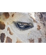 Wall Decor Giraffe Eye Print - $40.00
