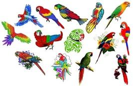 Parrot  Temporary Tattoos  - $11.00