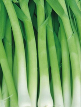 50pcs Chinese Green Leek Vegetables,Very Delicious Edible IMA1 - $13.99
