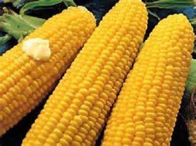 200 Seeds Bodacious sweet corn seeds