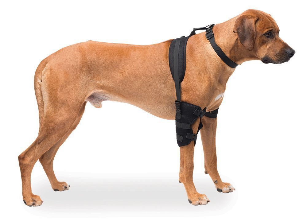 Large Breed Large Elbow Pet Therapy Wrap with Gel Hot and Cold Therapy PET 307