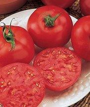 1 lb Seeds of Oregon Spring Tomato - $293.04
