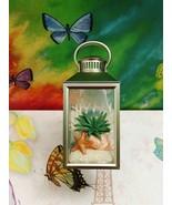 Bath Body Works Beach Plant Aloe Star Lantern Wallflower Unit Nightlight... - $24.30