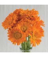 Alpha Organic Calendula Seed /  Calendula Flower Seeds - $12.00
