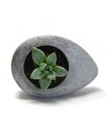 Concrete Drop Planter Flower Pot Handmade Home & Garden Decor Natural Gray - $29.99