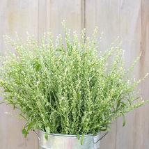 Persian Cress Organic Cress Seed / Persian Cress Flower Seeds - $17.00