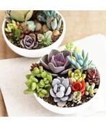 100pcs Mixed Succulent Seeds Lithops Rare Living Stones Plants Cactus Ho... - $13.50