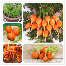 Parisian Carrot Seeds Non-GMO Vegetable Seeds Kitchen Assisted Food 100 ... - $4.76
