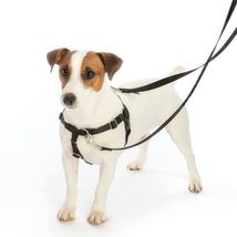 2Hounds Freedom No Pull Dog Harness Medium Welcome Back 80's & Training Leash!   image 3