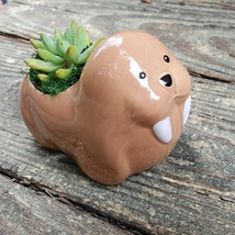 """Walrus Planter with Succulent, Live Plant in Ceramic Animal Pot, 5"""" image 1"""