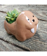 """Walrus Planter with Succulent, Live Plant in Ceramic Animal Pot, 5"""" - £12.31 GBP"""