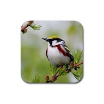 Beautiful Bird On The Tree (Square) Rubber Coaster - $2.99