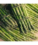1 Packet of 100 Seeds Asparagus Mary Washington Vegetable/Liliaceae / As... - $17.62