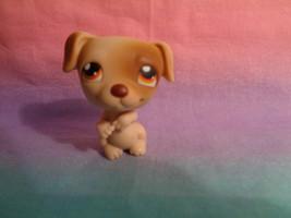 Hasbro Littlest Pet Shop Brown / Tan Jack Russell Puppy Dog #109 Orange ... - $58,06 MXN