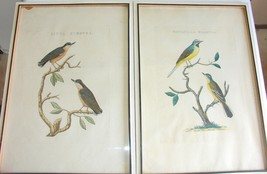 Antique Bird Print-Sepp-Nozeman-1770 Hand Coloured Etching Estate Find - $494.99