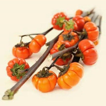 5 Pumpkin Tree Seeds-1113 - $2.98