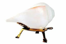 Loud and Big Shell Vamavarti Blowing Shankh with Brass Stand, White 7 In... - $37.24