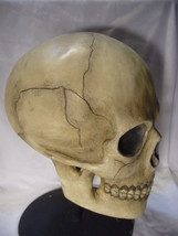 Bethany Lowe Bone Head Skull for Halloween no. TD0570 image 2