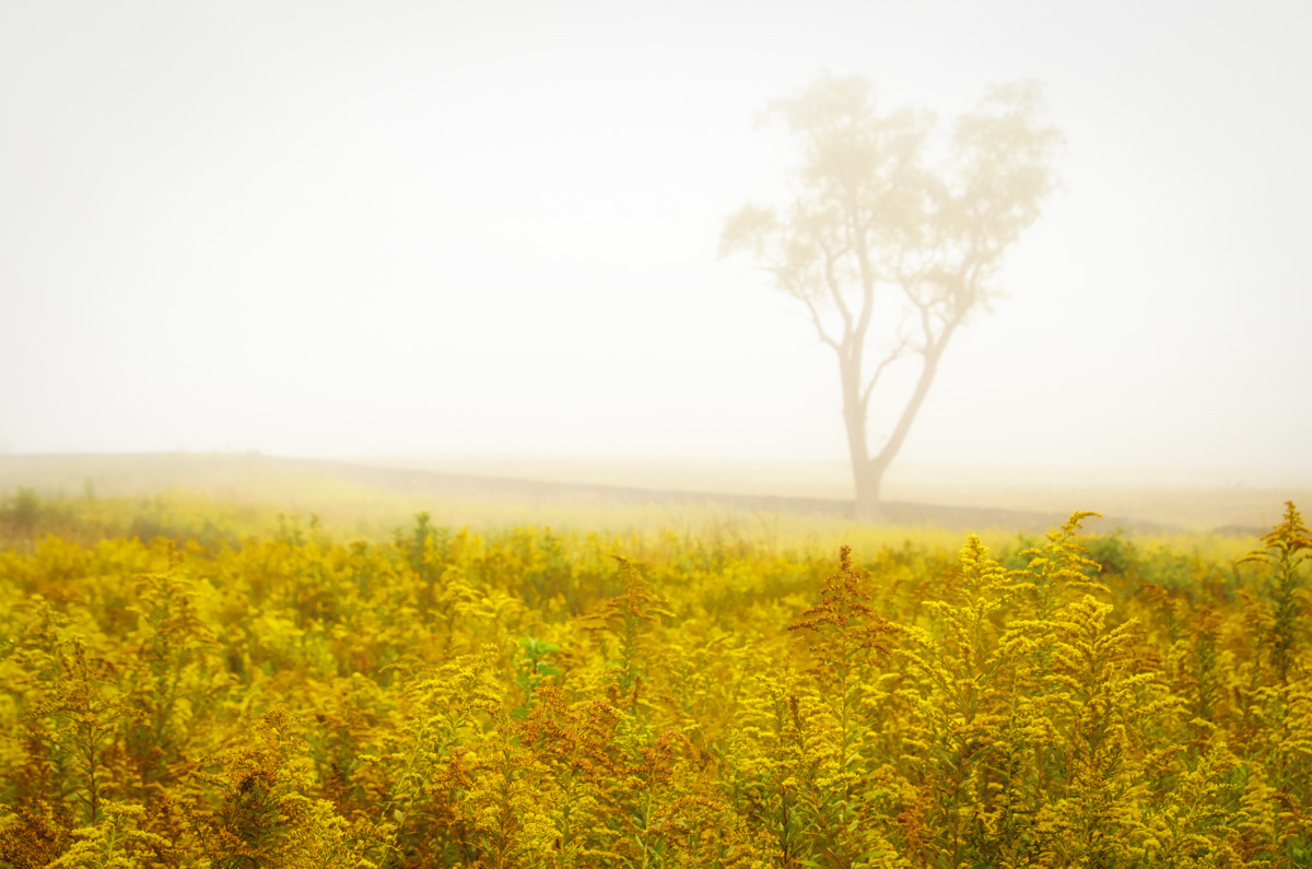 Primary image for Dreams of Goldenrod and Fog Rustic Landscape Photograph Unframed Wall Art Prints