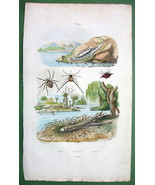 SPIDERS Arachnides & Sparling Fish !! SUPERB H/C Color Antique Print Eng... - $16.83