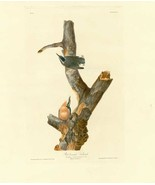 Audubon - Red breasted Nuthatch - Plate 105 - Poster Wall Art Home Decor - $22.99+