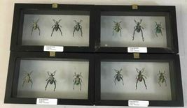 Insect Entomology Lot Collection 36pc Specimen Scorpion Lantern Fly Beetle image 12