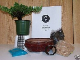 Juniper Bonsai Tree Starter Kit With Live Tree Green Garden Beauti Home - $77.23
