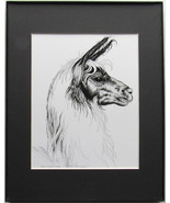 Llama, Framed Wildlife Art Print, Pen and Ink, Home Decor, matted 11 X 1... - $39.00
