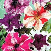 100pcs Very Elegant Rare Flower Seeds Colorful Wrinkleds IMA1 - $13.99