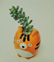 """Donkey's Tail Succulent in Tiger Planter, Sedum Morganianum 2"""" Orange Ceramic image 5"""
