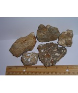 Ancient Fossiliferous Rock Lot--Rare Find From Kern County, California  - $6.99