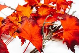 CraftMore Fiery Maple Fall Leaf Garland 6' image 3