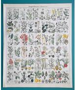 BOTANY Plants Laurel Dogwood Gum Tree Almond Arbutus - 1843 HC Color Print - $39.60