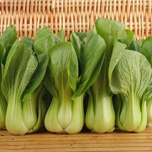Pak Choi Bok Chinese Cabbage Seeds green vegetables Seeds Easy 500 Parti... - $8.55
