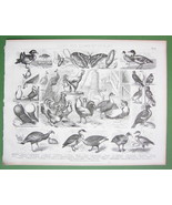 FARMING Hens Geese Turkey Pigeons Silkworms - 1870 Antique Print - $11.47